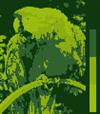 Screen color test Gameboy