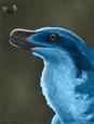 macaw acheroraptor
