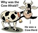 cow-jokes