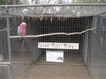 galah-aviary-zoo