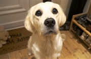 Dog-begging-stand-810x519