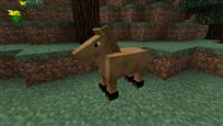 Shetlander horse