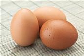 Australorp Eggs