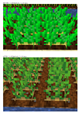 Textures_BEFORE_and_AFTER_Potatoes