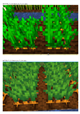 Textures_BEFORE_and_AFTER_Carrots