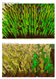 Textures_BEFORE_and_AFTER_Wheat