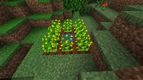 Small Peanut Farm