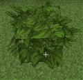 leaves_no_gray