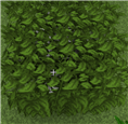 leaves_stacked_gray