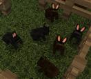 rabbits4real