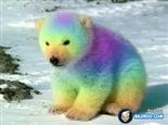 Colorful Polar Bear
