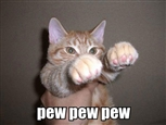 Funny-Cat-Pictures-cats-935656_500_375