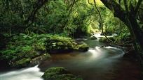 River-in-the-Jungle-Wallpaper
