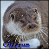 View Otterun's Profile