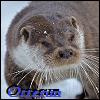 View Otterun's Profile