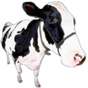 View MooingCow's Profile