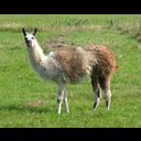 View Swedish_Llama's Profile