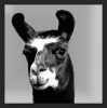 View Blackllama79's Profile