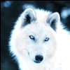 View SnowBlindWolf's Profile