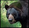 View BearDrummer's Profile