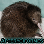 View Apterygiformes's Profile