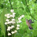 View Celtic_Hummingbird's Profile