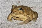 View Tactical_Toad's Profile