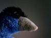 View MCFUser580451's Profile