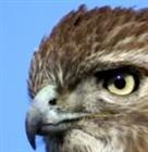 View Hawkheart's Profile