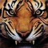 View tiger7758's Profile