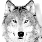View Wolfboy369's Profile