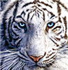 View ISQUISHALL's Profile