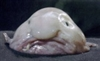 View Blobfish's Profile