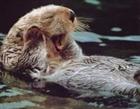 View Otterhedgehog2's Profile