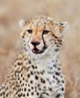 View RawrTara's Profile