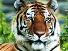 View Tigerlordz's Profile