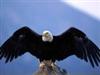View SwiftLilEagle's Profile