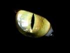 View Enderman_Shade's Profile