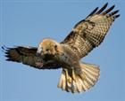View hawkbeaver's Profile