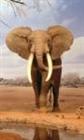 View Elephant454's Profile