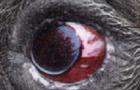 View Trace_N_Stien's Profile
