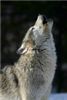 View argentwolf's Profile