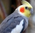 View Tiel's Profile