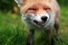 View foxky's Profile