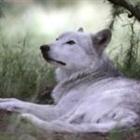 View WolfTheHunter's Profile