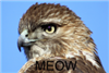 View SupremeHawk's Profile