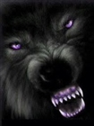 View BlackyTheDarkWolf's Profile
