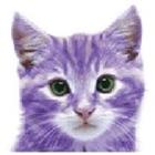 View PurpleCats's Profile