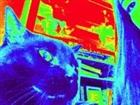 View kittenspwn's Profile