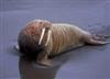 View walrus777115777's Profile